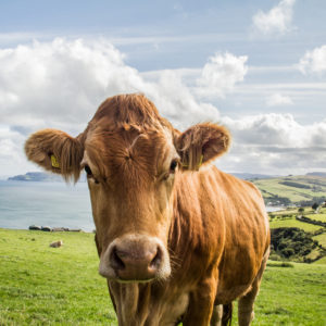 Give Up Steak, Save the Planet